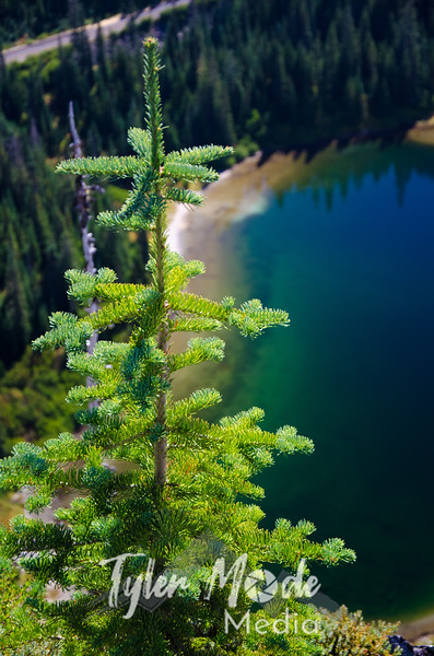 585  G Tree and Louise Lake