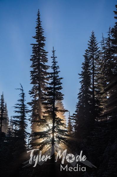 93  G Tree and Mist V