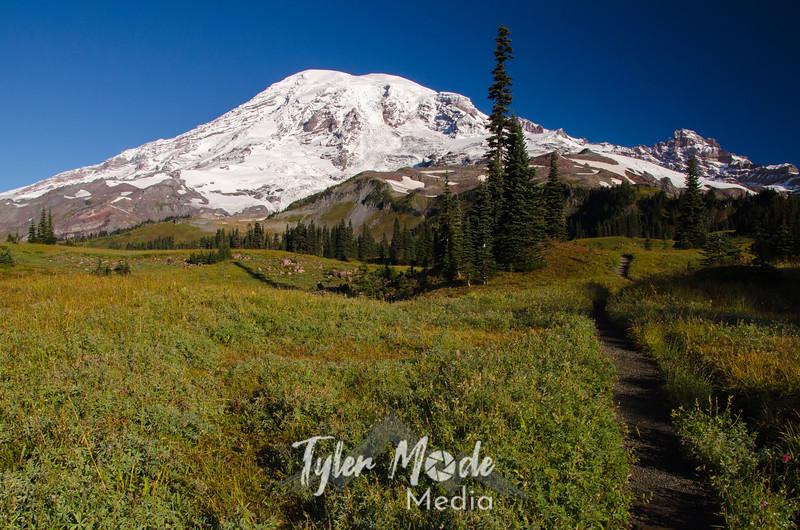 265  G Rainier and Trail Meadows