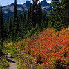 562  G Trail Tatoosh and Fall Colors V