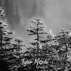 134  G Rain Soaked Trees BW Soft