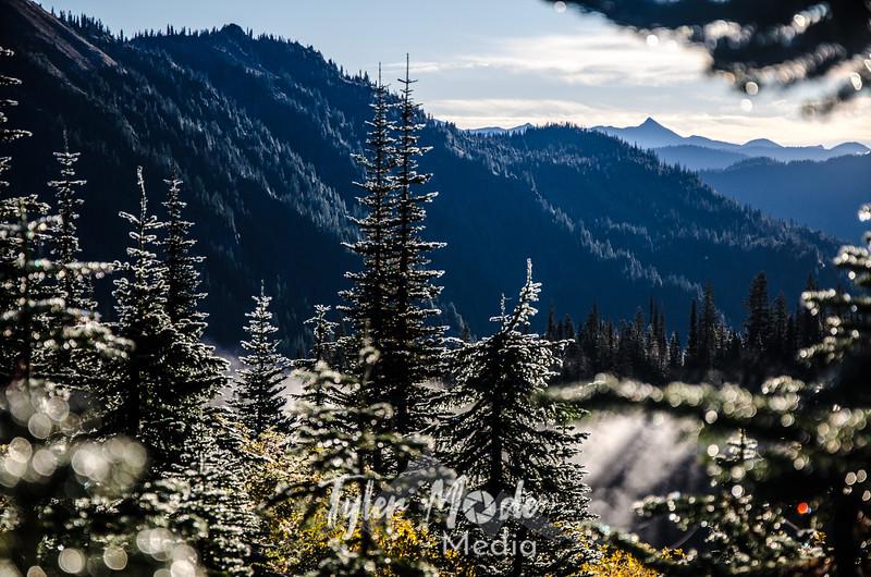 143  G Morning Wet Trees Sharp