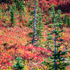 869  G Fall Colors and Firs V