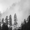 1  G Trees and Clouds BW