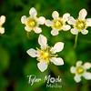 86  G White Flowers