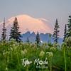 46  G Mt  Rainier Morning