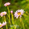 78  G Bee on Flower