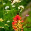 91  G Bee on Flower V