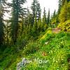 87  G Trail Views