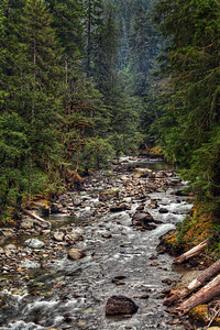 Mount Rainier National Park - Camp Ohanapecosh Bridge, Ohanapecosh River