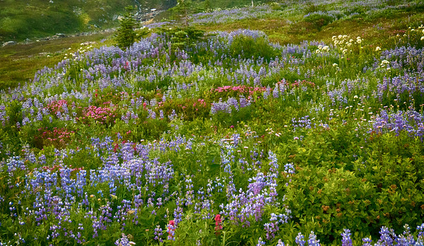 Wildflowers in Bloom