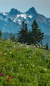 Meadow at Mount Rainier