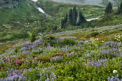 Blooming Wildflowers at Mount Rainier National Park