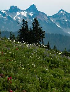 Mount Rainier Meadows