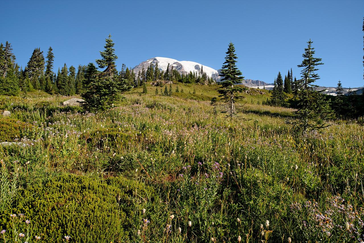 Subalpine Meadow