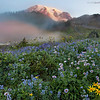 Fog & Flowers