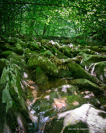Forest stream in Wintergreen, VA