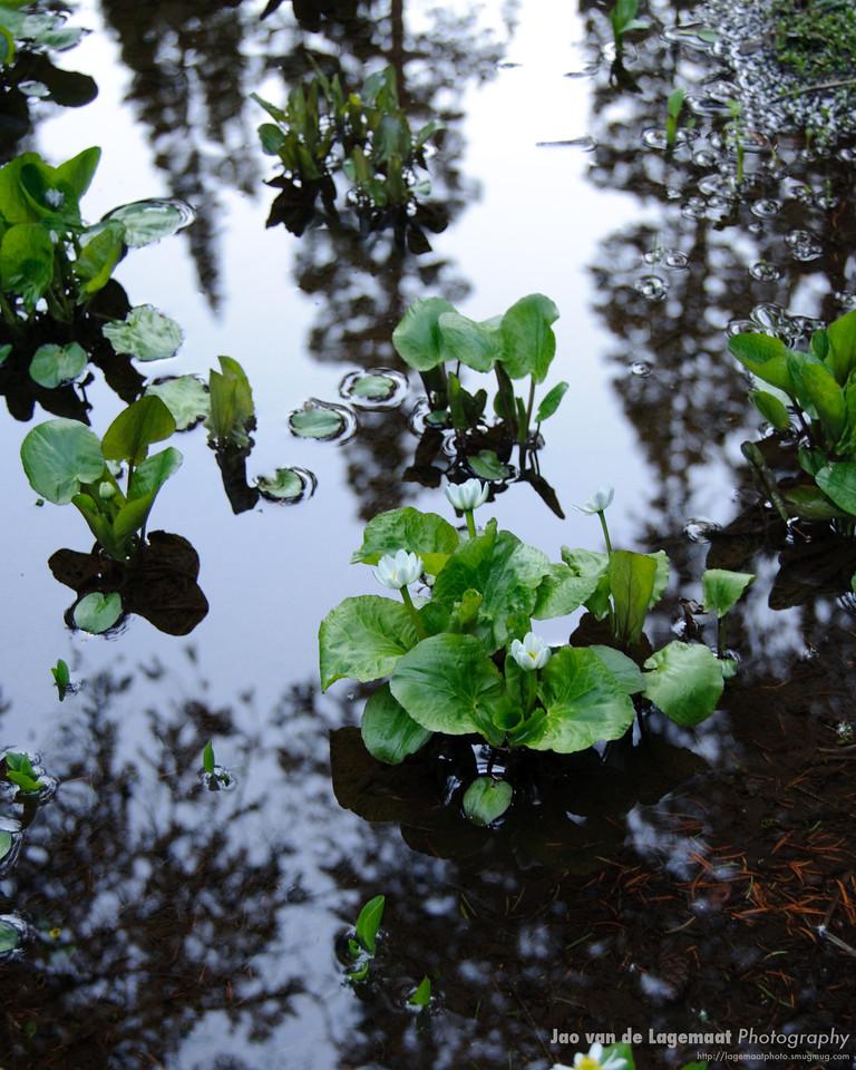 Marigold reflection