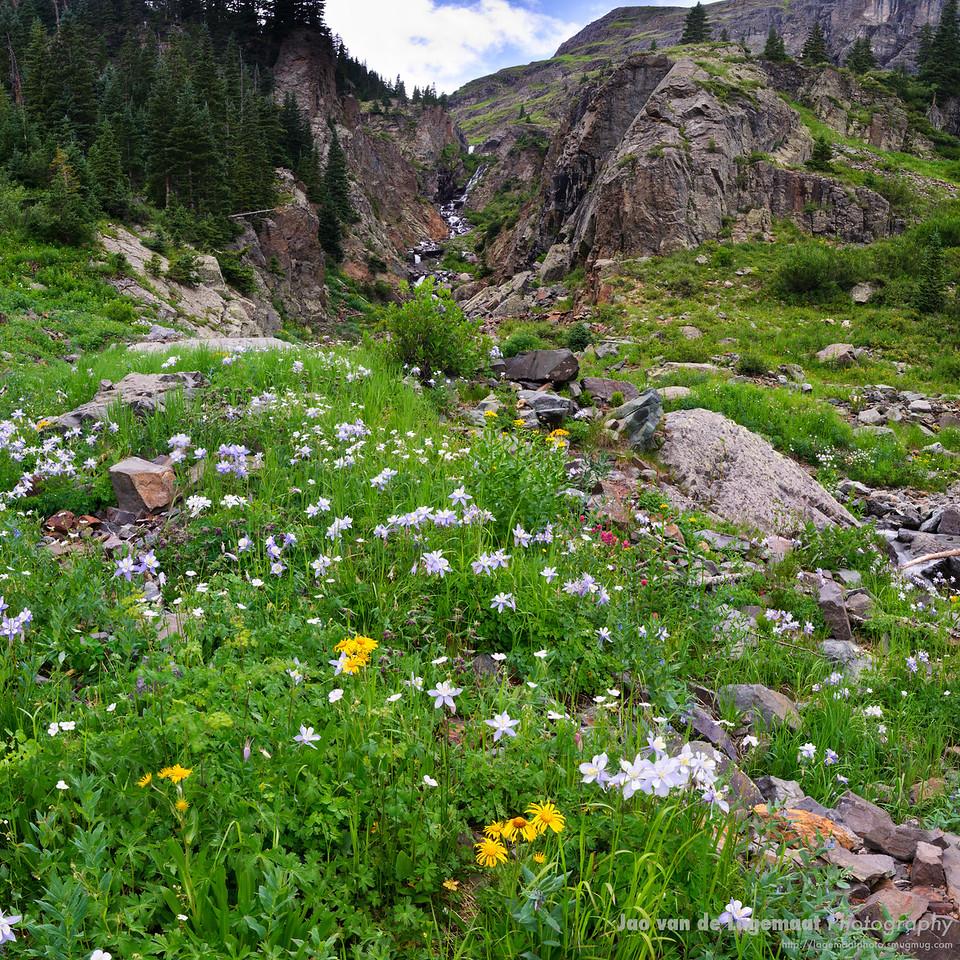 Field of flowers at Mill Creek