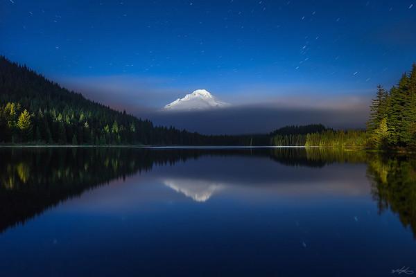 Trillium Dreaming - Oregon