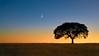 """""""Roxy's Tree"""" - California"""