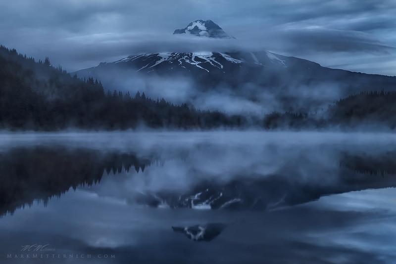 Trillium Shrouded - Oregon