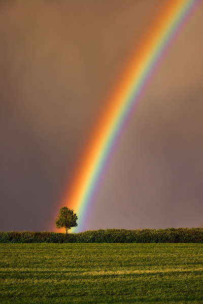 """Rainbow Tree of Life"" - Oregon"