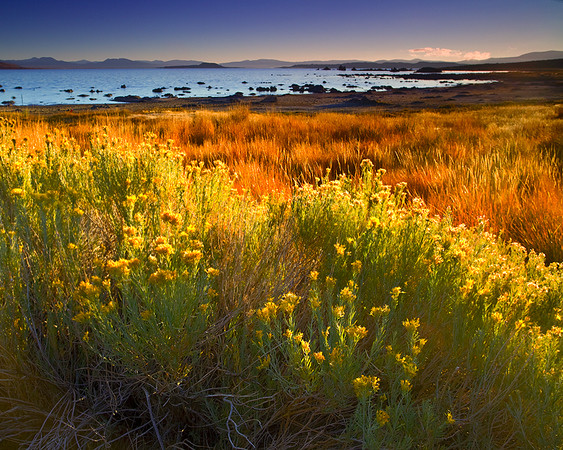 Fall Sunrise,<br /> Eastern Sierra, CA