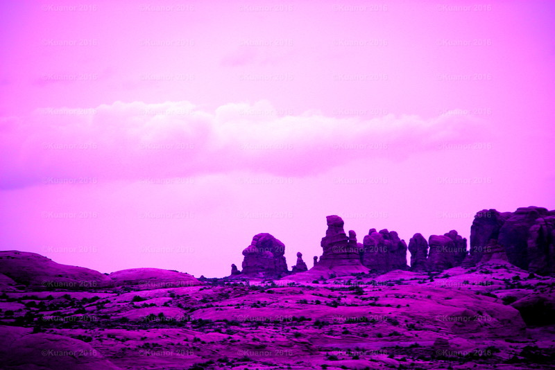 Pink Gnomes  (GANP)