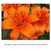HENRY BUCHANAN PHOTOGRPAHY