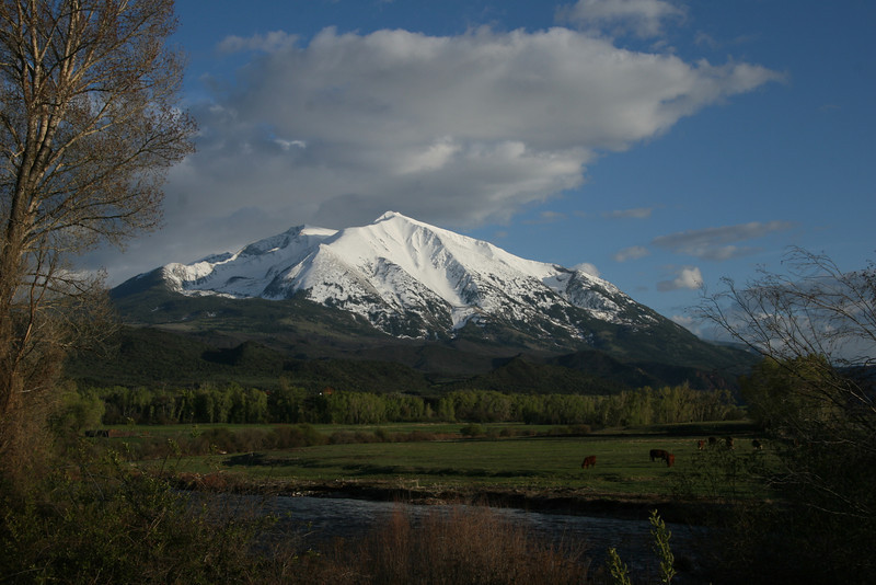 Crystal River and Mt Sopris w/cows.