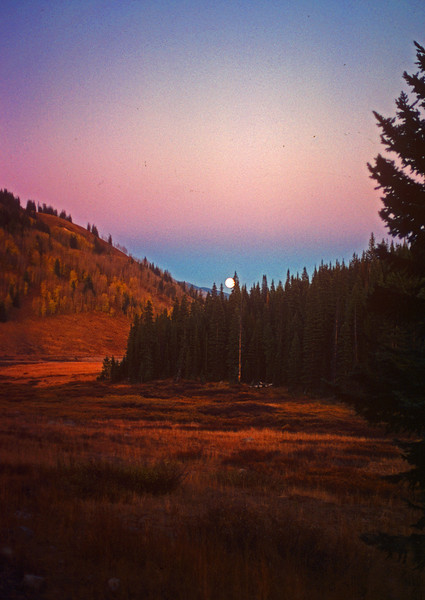 Moonrise in the mountain meadows