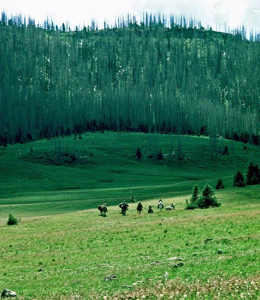 Flattops Wilderness Area