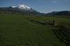 Toms Hay meadow