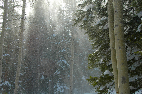 Snow cascading from the trees on a beautiful Utah morning after new powder overnight