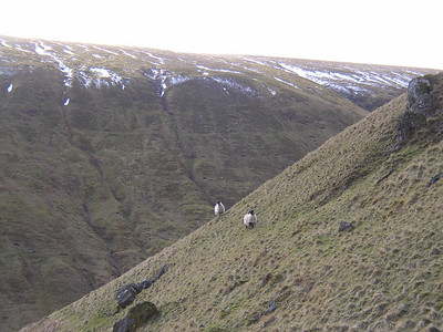 An Amble in the Ochils