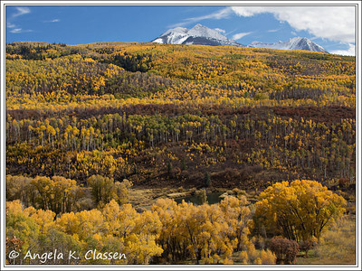 Aspens put on a show at McClure Pass, CO