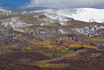 Bright aspens light up the mountainside after a fresh snow, McClure Pass, CO
