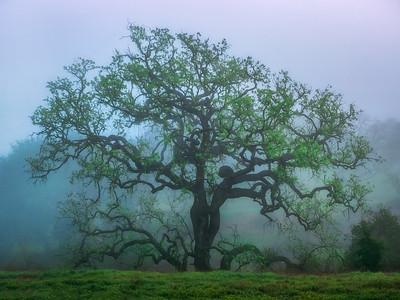 Central coast Fog