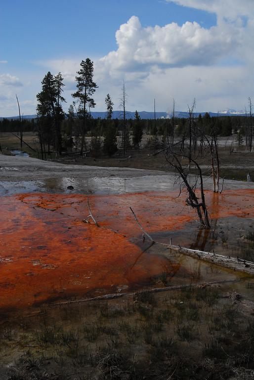 by Kym Puga Yellowstone