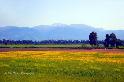 Mount Hermon (Israel)in Spring