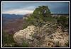 Leben und Sterben, Grand Canyon
