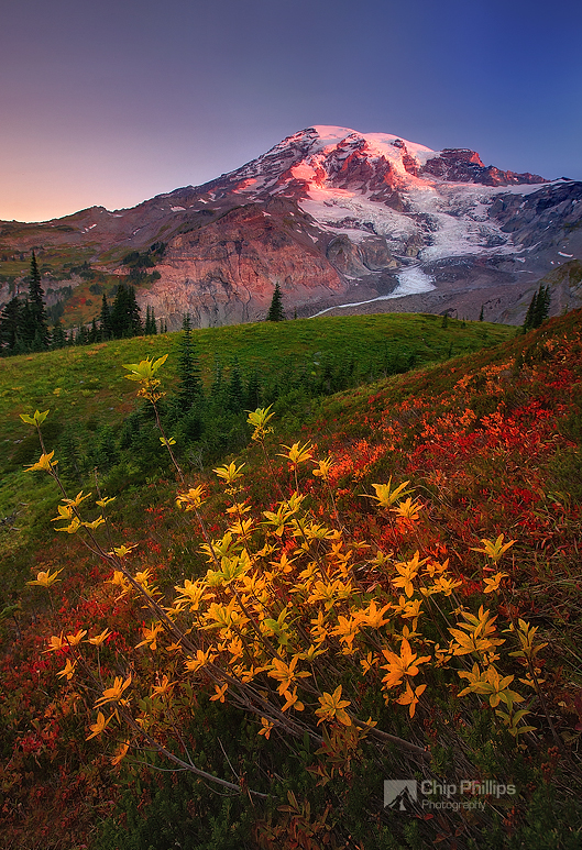 """Fall Sunrise, Paradise, Mount Rainier""  Fall colors seen at sunrise in a beautiful meadow in the Paradise area of Mount Rainier National Park."