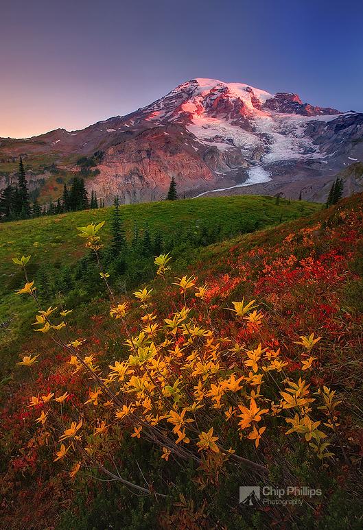 """Fall Sunrise, Paradise, Mount Rainier""  Fall colors seen at sunrise in a beautiful meadow in the Paradise area of Mount Rainier National Park."