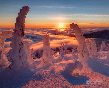"""Tree Henge""  A beautiful sunset from the summit of Mount Spokane."