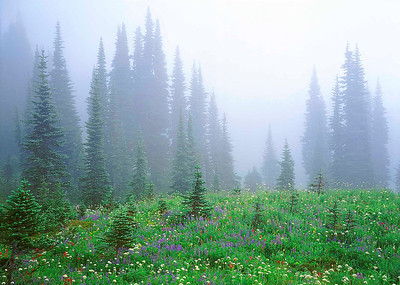 """Misty Meadow"""