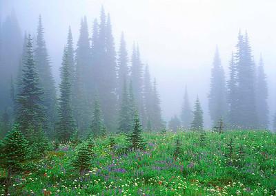"""""""Misty Meadow"""""""