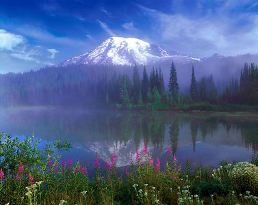 """Dawn Mist"" First light at Reflection Lake on Mt. Rainier's south side captures a perfect mirror image framed by magenta Fireweed and the white berries of Pearly Everlasting bushes."