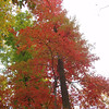 More autumn red, yellow and green