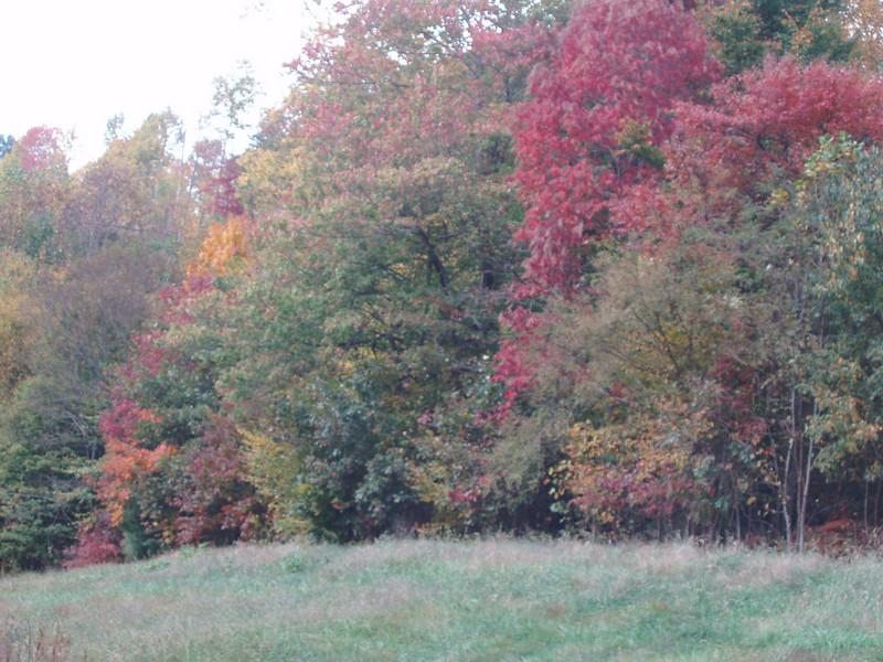 autumn leaves at elk waller